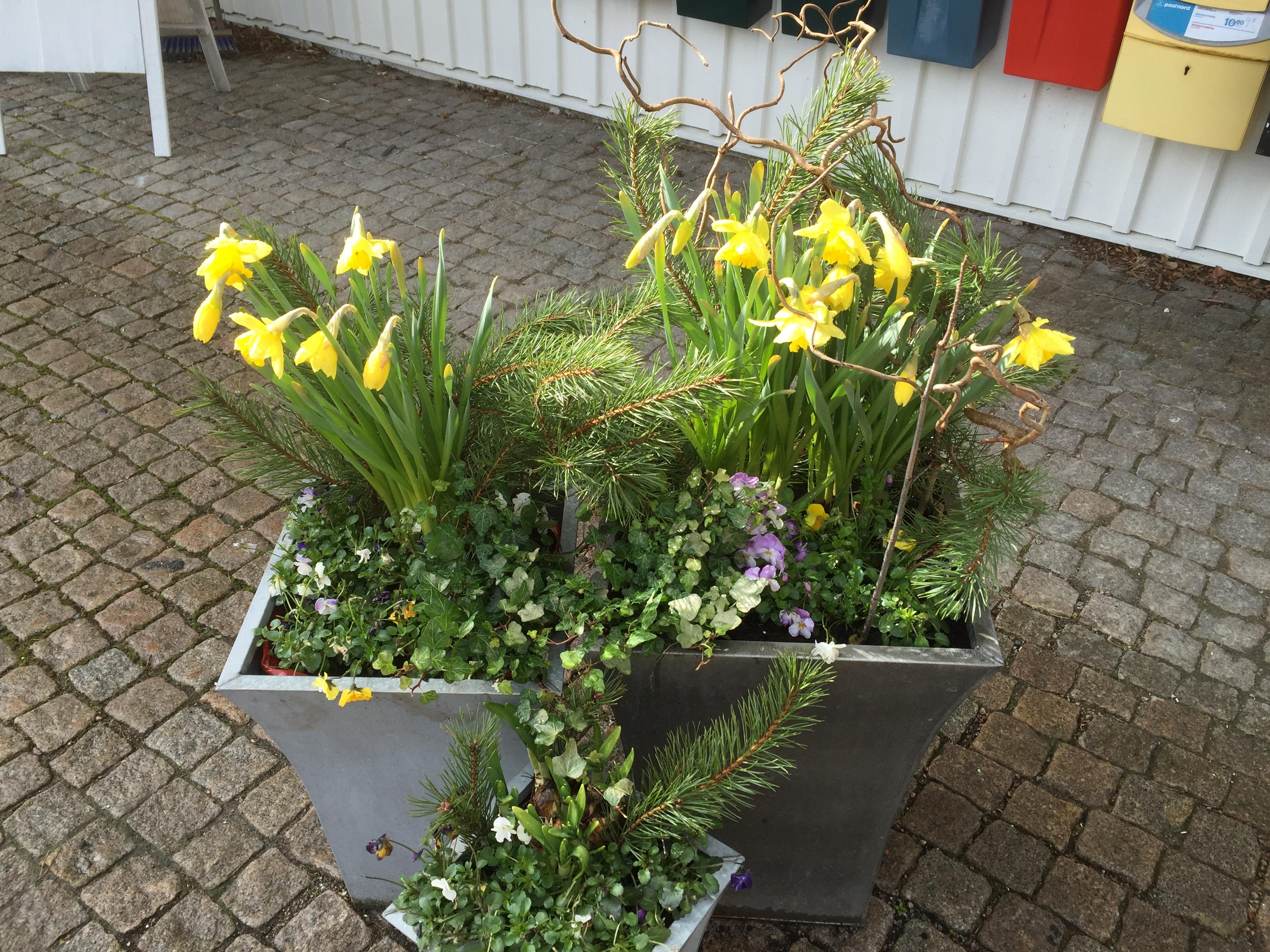 Blommor utanför Åh stiftsgårds entre. Foto: Carina Etander Rimborg
